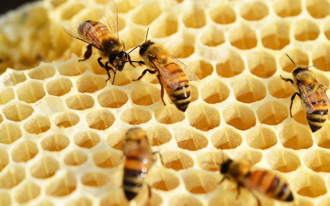 Fleißig wie die Bienen
